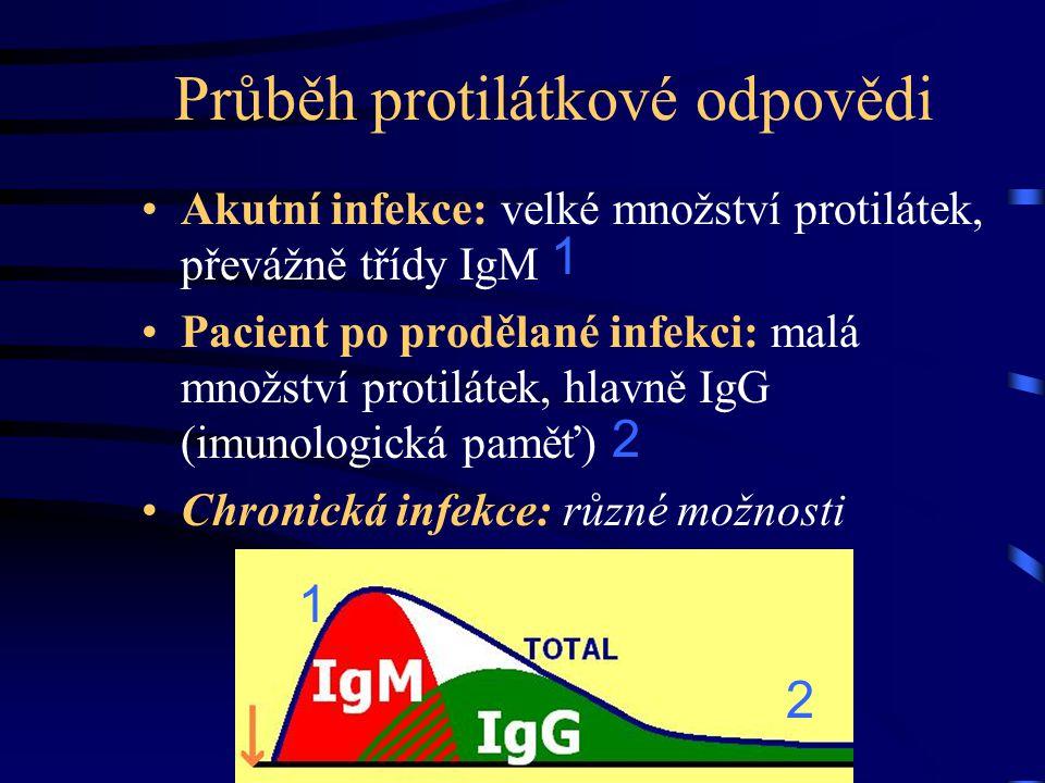 Průběh protilátkové odpovědi Akutní infekce: velké množství protilátek, převážně třídy IgM Pacient po prodělané infekci: malá množství protilátek, hla