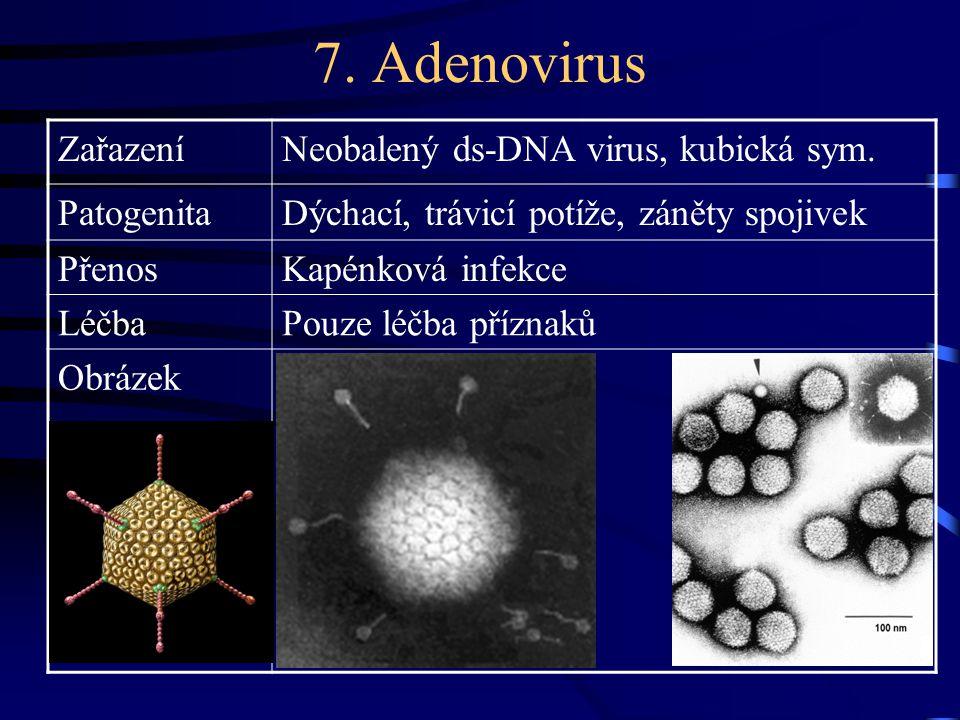 7. Adenovirus ZařazeníNeobalený ds-DNA virus, kubická sym. PatogenitaDýchací, trávicí potíže, záněty spojivek PřenosKapénková infekce LéčbaPouze léčba