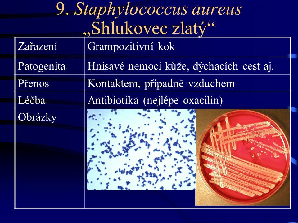 """9. Staphylococcus aureus """"Shlukovec zlatý"""" ZařazeníGrampozitivní kok PatogenitaHnisavé nemoci kůže, dýchacích cest aj. PřenosKontaktem, případně vzduc"""
