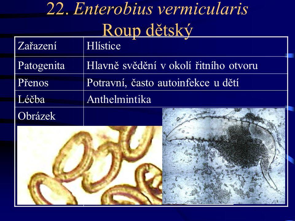 22. Enterobius vermicularis Roup dětský ZařazeníHlístice PatogenitaHlavně svědění v okolí řitního otvoru PřenosPotravní, často autoinfekce u dětí Léčb