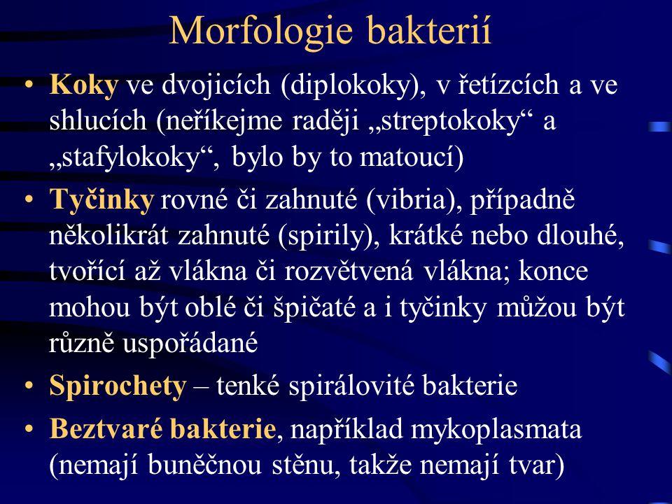 """Morfologie bakterií Koky ve dvojicích (diplokoky), v řetízcích a ve shlucích (neříkejme raději """"streptokoky"""" a """"stafylokoky"""", bylo by to matoucí) Tyči"""