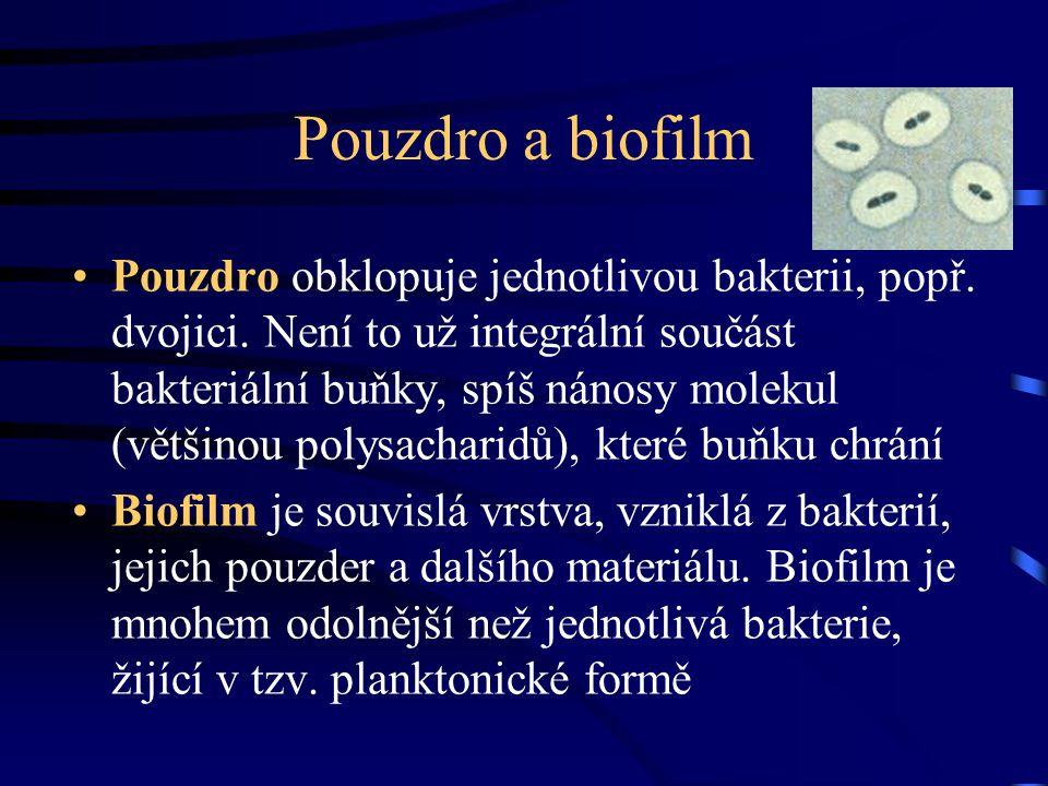 Přímý kontakt plouvoucích bakterií s.povrchem Přilnutí na tento povrch Růst a shlukování těchto bakterií do mikrokolonií Produkce polymerové matrix Vytvoření trojrozměrné struktury, které se říká biofilm Bakterie regulují svůj počet pomocí takzvaného quorum sensingu ( Podle kolegyně Černohorské z našeho ústavu) Jak se tvoří biofilm bakterií +