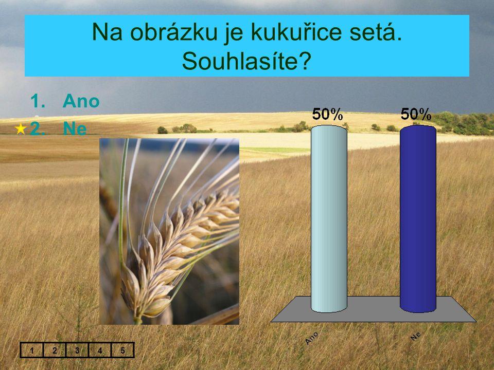 Na obrázku je kukuřice setá. Souhlasíte? 1.Ano 2.Ne 12345