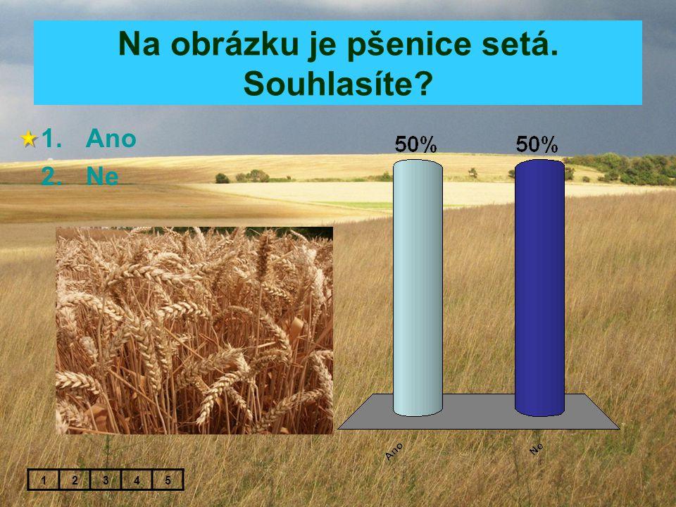 Na obrázku je pšenice setá. Souhlasíte? 1.Ano 2.Ne 12345