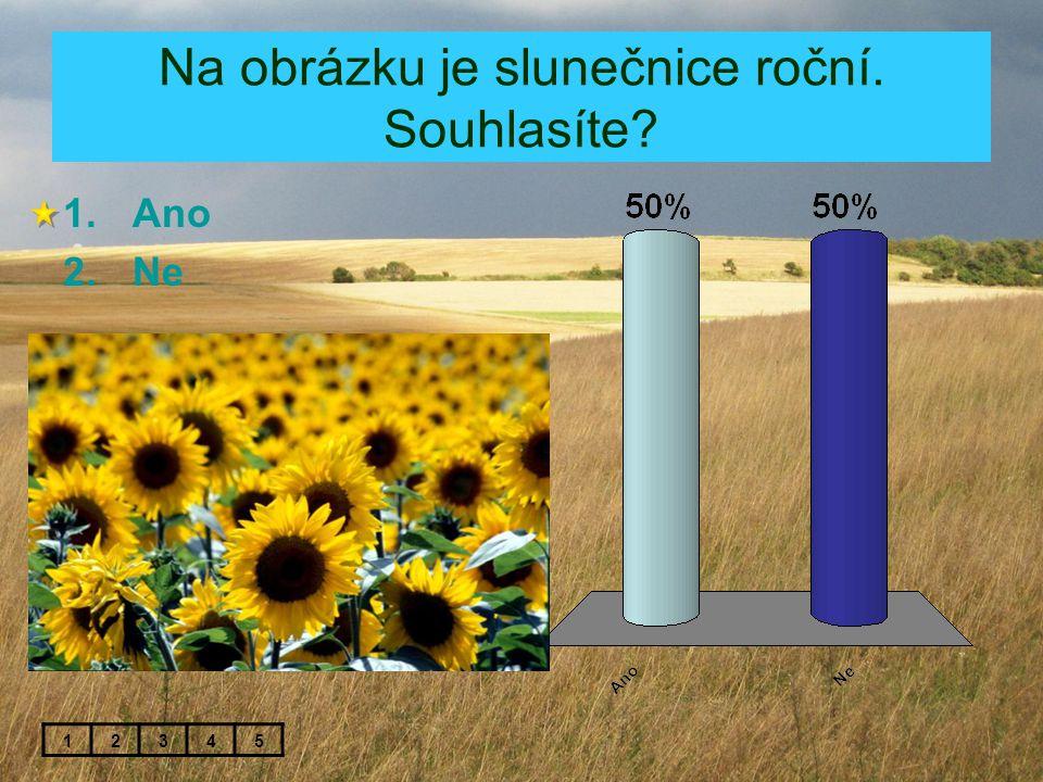 Na obrázku je slunečnice roční. Souhlasíte? 1.Ano 2.Ne 12345