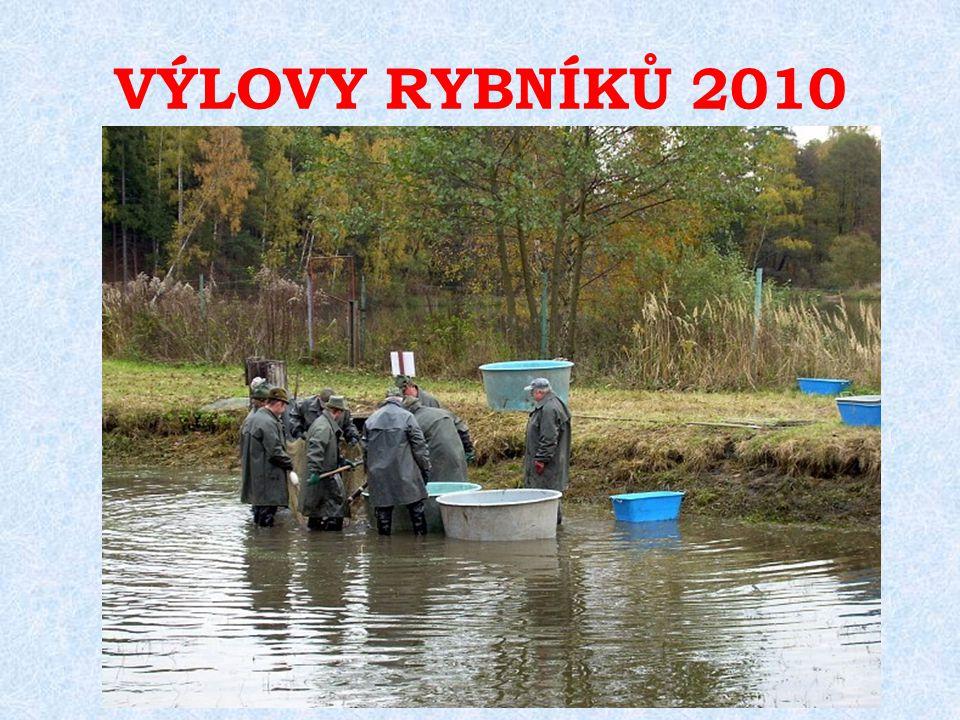 PŘEHLED VÝLOVŮ RYBNÍKŮ – JARO 2011 Výlovy komorových rybníků Malíkovský Výlov revíru Vajgar ( revír Hamerský potok 1A)