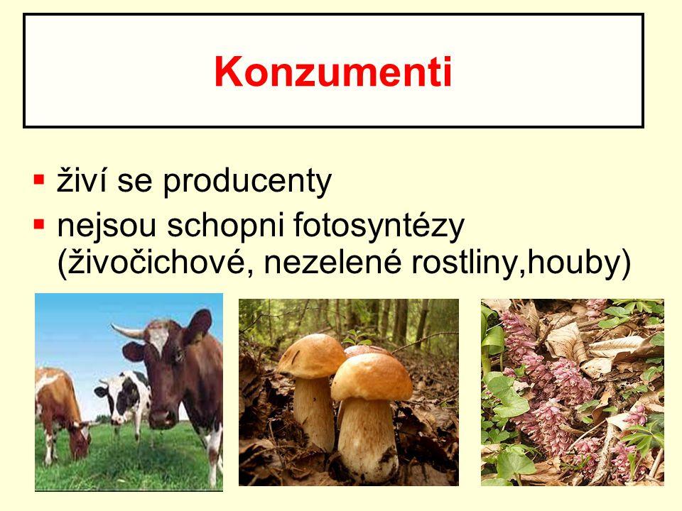  živí se producenty  nejsou schopni fotosyntézy (živočichové, nezelené rostliny,houby) Konzumenti