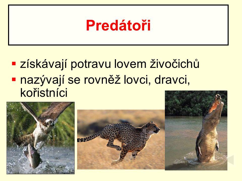 získávají potravu lovem živočichů  nazývají se rovněž lovci, dravci, kořistníci Predátoři