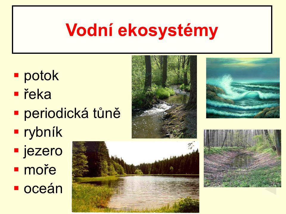  potok  řeka  periodická tůně  rybník  jezero  moře  oceán Vodní ekosystémy