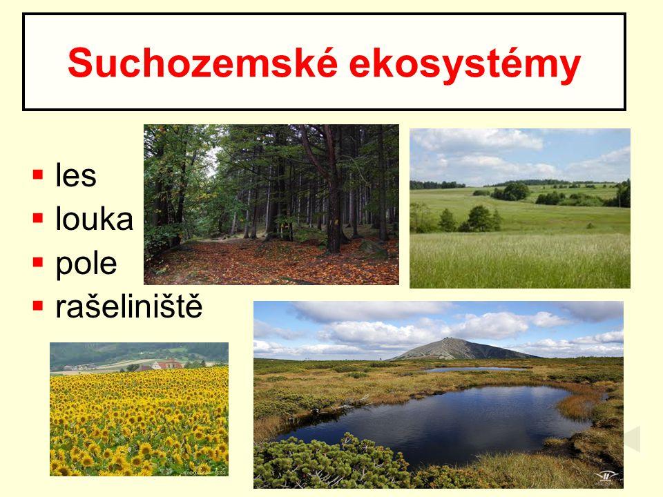  les  louka  pole  rašeliniště Suchozemské ekosystémy