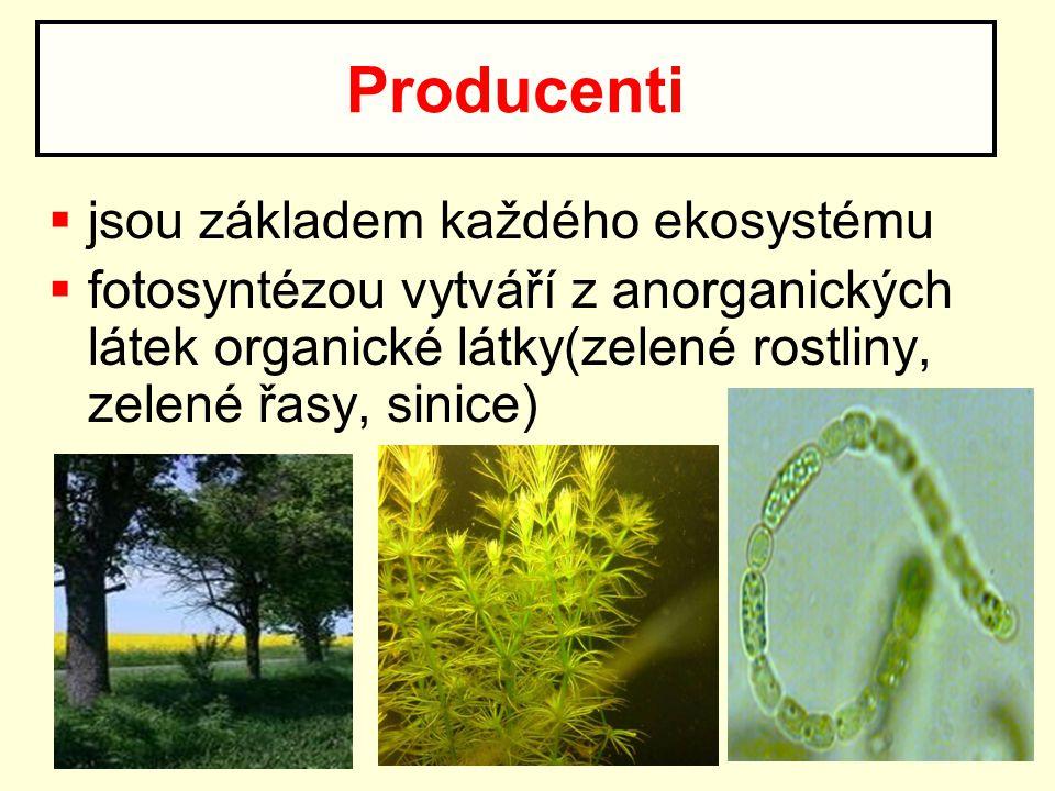  jsou základem každého ekosystému  fotosyntézou vytváří z anorganických látek organické látky(zelené rostliny, zelené řasy, sinice) Producenti