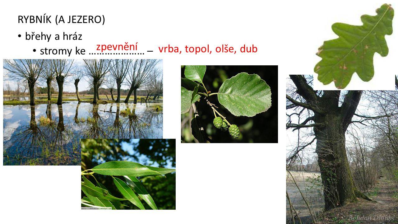 RYBNÍK (A JEZERO) břehy a hráz stromy ke ………………… – vrba, topol, olše, dub zpevnění