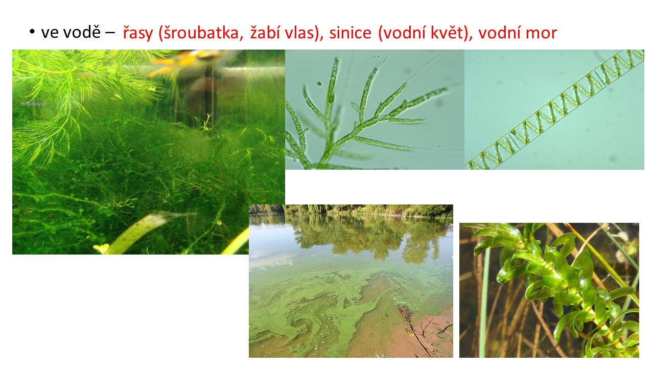 živočichové bezobratlí: plovatka škeble hltanovka larvy vážky šídlo motýlice komár bzikavka potápník nitěnka
