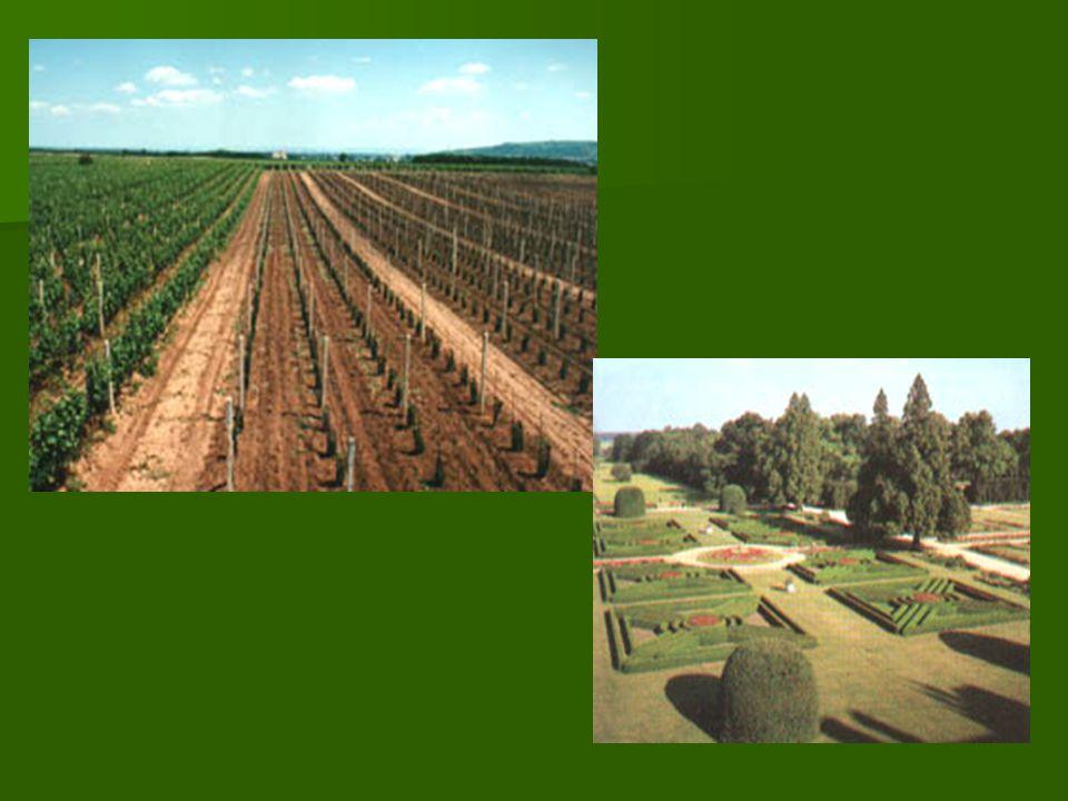 Zemědělská půda Půdu, kterou tvoří lidé využívají k pěstování zemědělských plodin, nazýváme zemědělská půda.