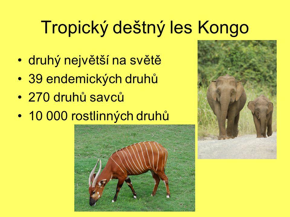 Tropický deštný les Kongo druhý největší na světě 39 endemických druhů 270 druhů savců 10 000 rostlinných druhů