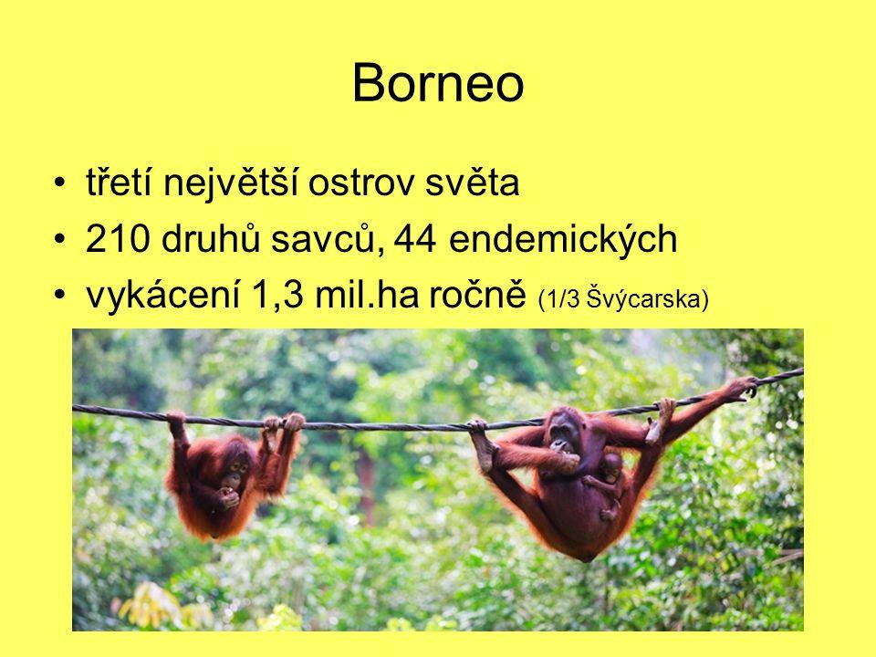 Borneo třetí největší ostrov světa 210 druhů savců, 44 endemických vykácení 1,3 mil.ha ročně (1/3 Švýcarska)