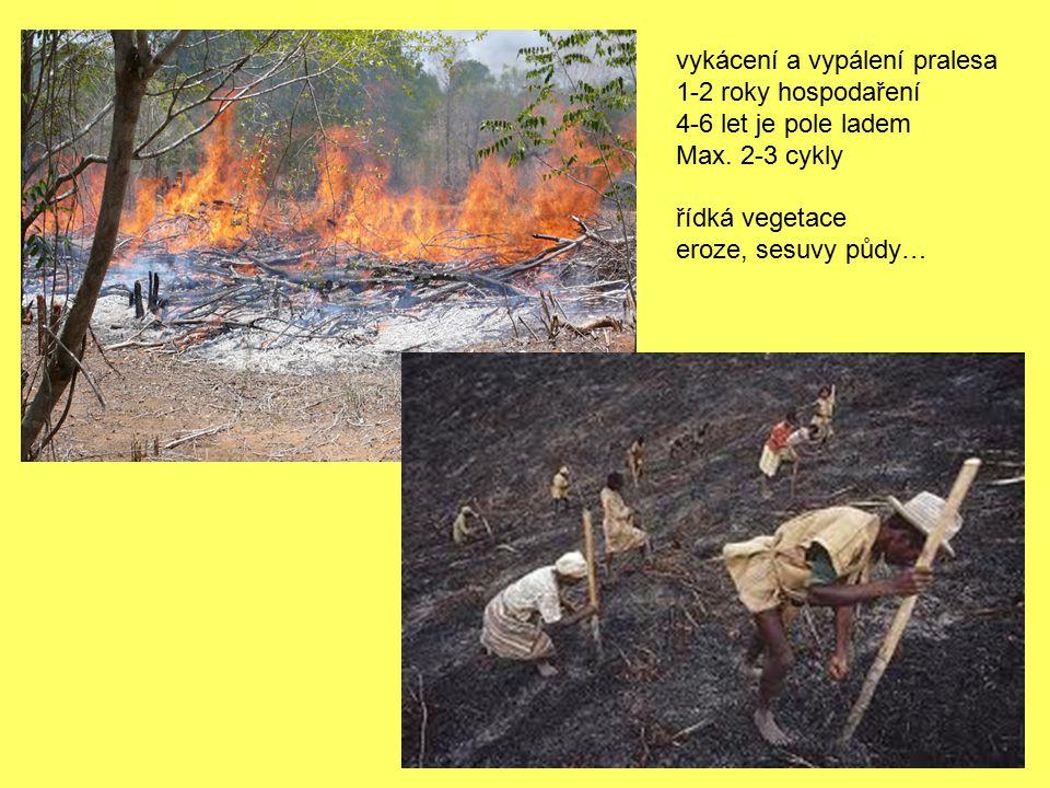 vykácení a vypálení pralesa 1-2 roky hospodaření 4-6 let je pole ladem Max. 2-3 cykly řídká vegetace eroze, sesuvy půdy…
