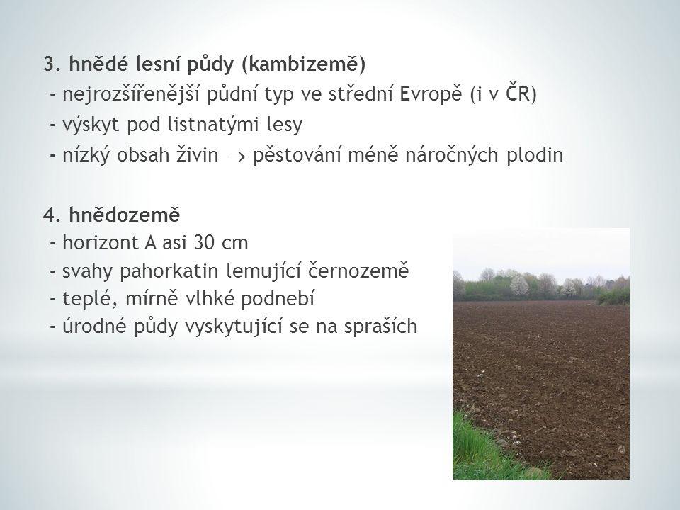 3. hnědé lesní půdy (kambizemě) - nejrozšířenější půdní typ ve střední Evropě (i v ČR) - výskyt pod listnatými lesy - nízký obsah živin  pěstování mé