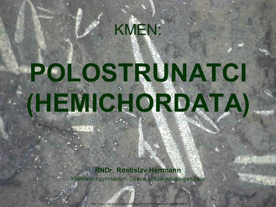 KMEN: POLOSTRUNATCI (HEMICHORDATA) RNDr.