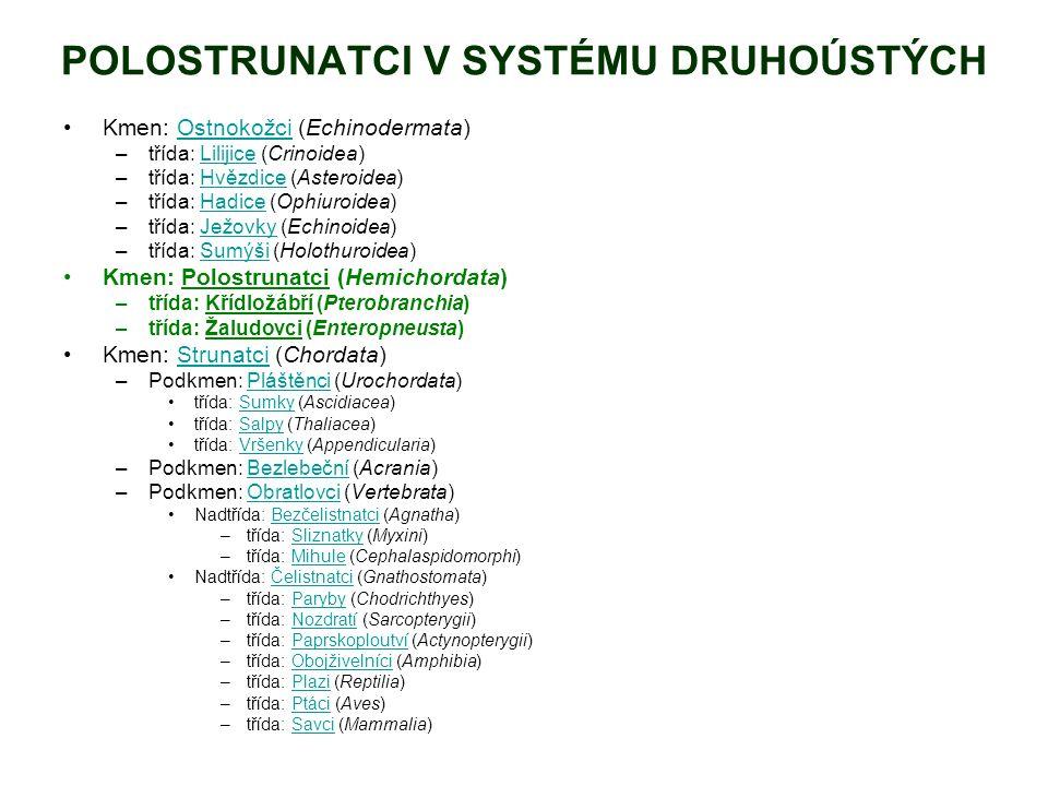 POLOSTRUNATCI V SYSTÉMU DRUHOÚSTÝCH Kmen: Ostnokožci (Echinodermata)Ostnokožci –třída: Lilijice (Crinoidea)Lilijice –třída: Hvězdice (Asteroidea)Hvězdice –třída: Hadice (Ophiuroidea)Hadice –třída: Ježovky (Echinoidea)Ježovky –třída: Sumýši (Holothuroidea)Sumýši Kmen: Polostrunatci (Hemichordata) –třída: Křídložábří (Pterobranchia) –třída: Žaludovci (Enteropneusta) Kmen: Strunatci (Chordata)Strunatci –Podkmen: Pláštěnci (Urochordata)Pláštěnci třída: Sumky (Ascidiacea)Sumky třída: Salpy (Thaliacea)Salpy třída: Vršenky (Appendicularia)Vršenky –Podkmen: Bezlebeční (Acrania)Bezlebeční –Podkmen: Obratlovci (Vertebrata)Obratlovci Nadtřída: Bezčelistnatci (Agnatha)Bezčelistnatci –třída: Sliznatky (Myxini)Sliznatky –třída: Mihule (Cephalaspidomorphi)Mihule Nadtřída: Čelistnatci (Gnathostomata)Čelistnatci –třída: Paryby (Chodrichthyes)Paryby –třída: Nozdratí (Sarcopterygii)Nozdratí –třída: Paprskoploutví (Actynopterygii)Paprskoploutví –třída: Obojživelníci (Amphibia)Obojživelníci –třída: Plazi (Reptilia)Plazi –třída: Ptáci (Aves)Ptáci –třída: Savci (Mammalia)Savci