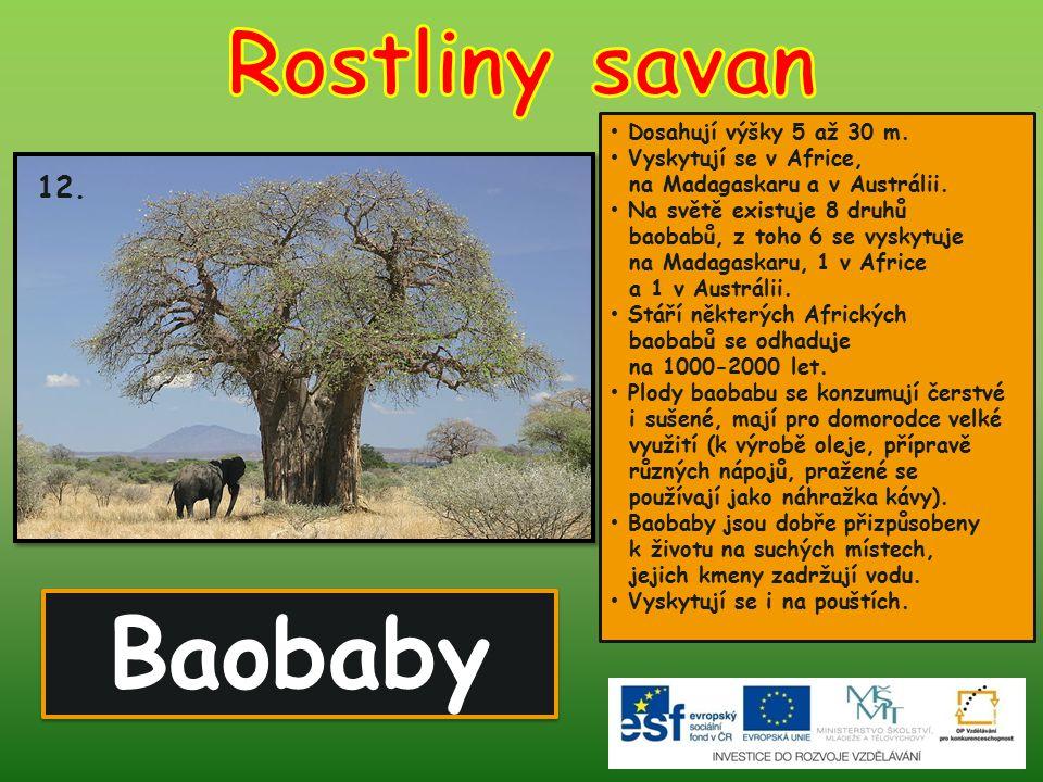 Baobaby 12. Dosahují výšky 5 až 30 m. Vyskytují se v Africe, na Madagaskaru a v Austrálii. Na světě existuje 8 druhů baobabů, z toho 6 se vyskytuje na