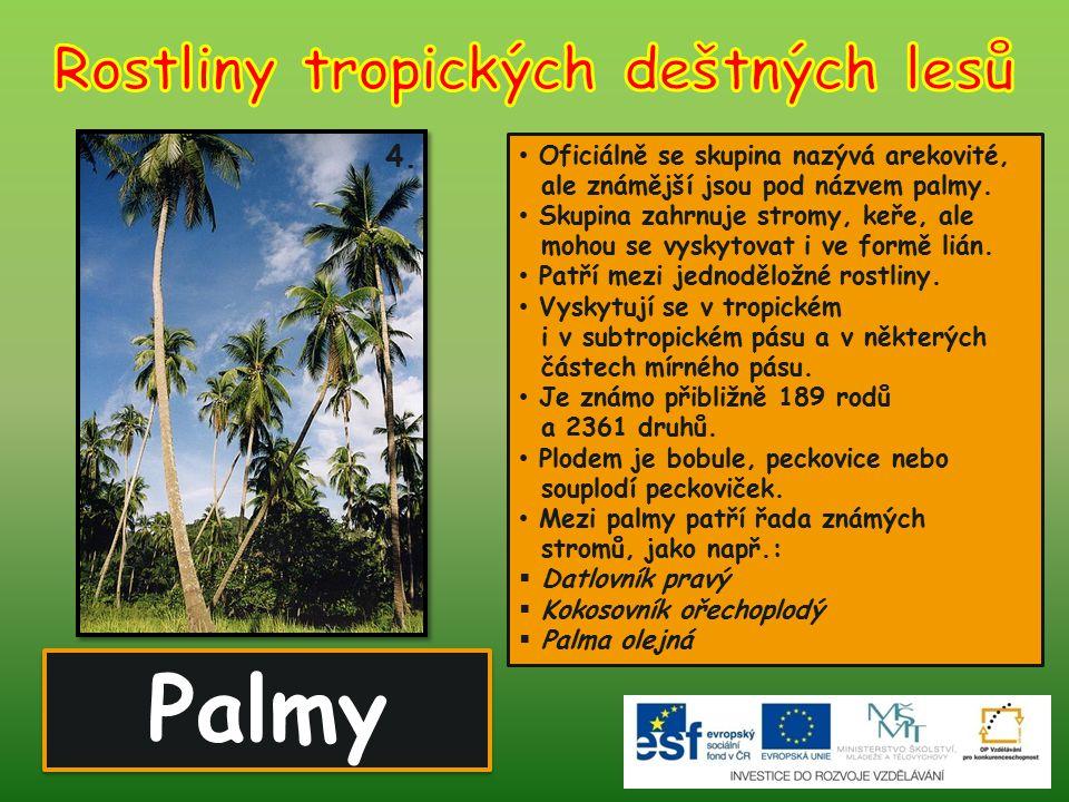 Palmy 4. Oficiálně se skupina nazývá arekovité, ale známější jsou pod názvem palmy. Skupina zahrnuje stromy, keře, ale mohou se vyskytovat i ve formě