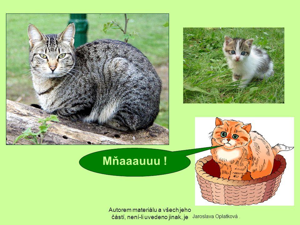 Autorem materiálu a všech jeho částí, není-li uvedeno jinak, je Mňaaauuu ! Jaroslava Oplatková.