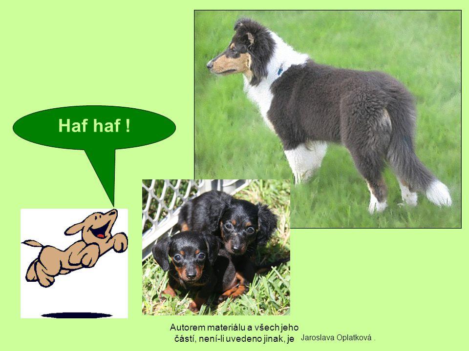 Autorem materiálu a všech jeho částí, není-li uvedeno jinak, je Haf haf ! Jaroslava Oplatková.