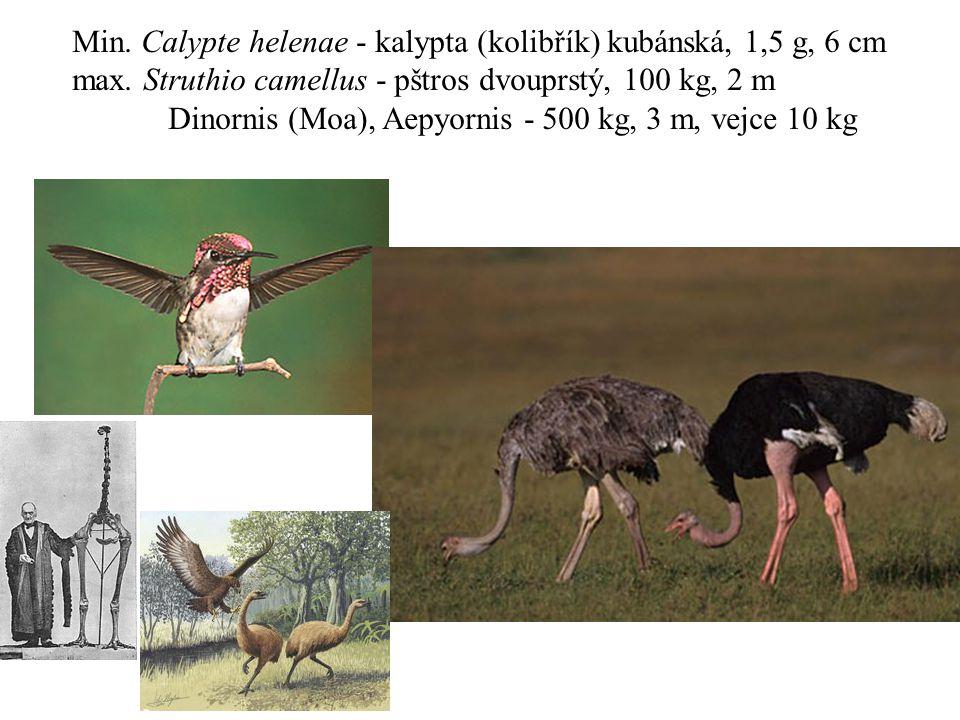 Min. Calypte helenae - kalypta (kolibřík) kubánská, 1,5 g, 6 cm max. Struthio camellus - pštros dvouprstý, 100 kg, 2 m Dinornis (Moa), Aepyornis - 500