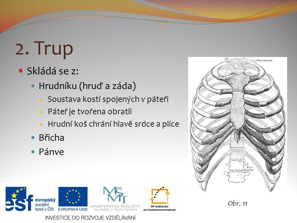 2. Trup Skládá se z: Hrudníku (hruď a záda) Soustava kostí spojených v páteři Páteř je tvořena obratli Hrudní koš chrání hlavě srdce a plíce Břicha Pá