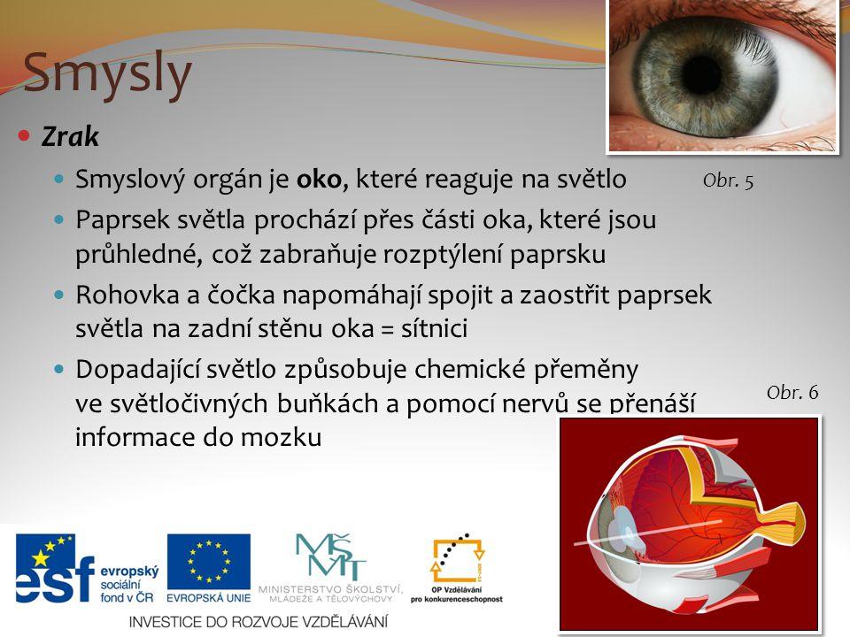 Smysly Zrak Smyslový orgán je oko, které reaguje na světlo Paprsek světla prochází přes části oka, které jsou průhledné, což zabraňuje rozptýlení papr