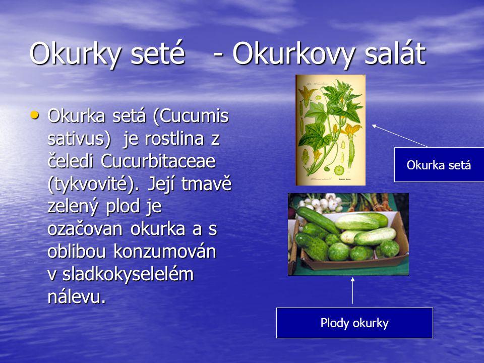 Okurky seté - Okurkovy salát Okurka setá (Cucumis sativus) je rostlina z čeledi Cucurbitaceae (tykvovité). Její tmavě zelený plod je ozačovan okurka a