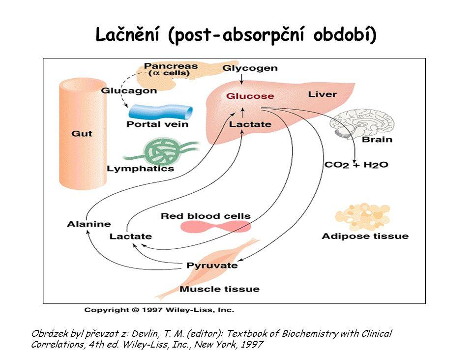 Lačnění (post-absorpční období) Obrázek byl převzat z: Devlin, T. M. (editor): Textbook of Biochemistry with Clinical Correlations, 4th ed. Wiley ‑ Li