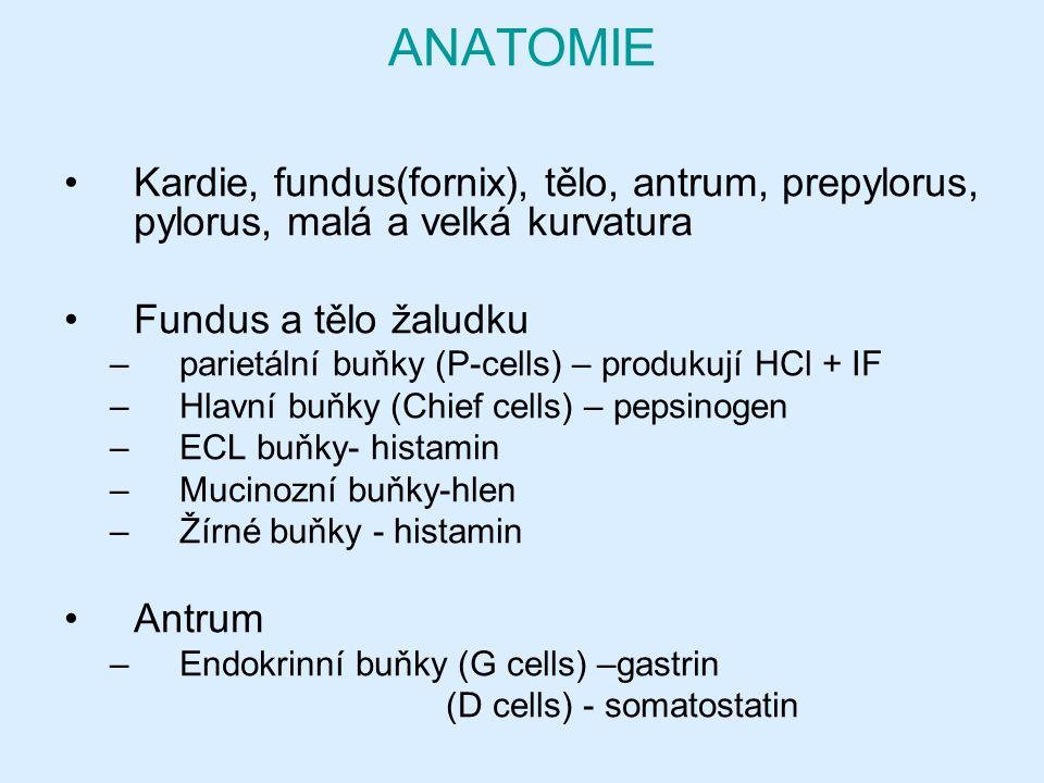 ANATOMIE Kardie, fundus(fornix), tělo, antrum, prepylorus, pylorus, malá a velká kurvatura Fundus a tělo žaludku –parietální buňky (P-cells) – produkují HCl + IF –Hlavní buňky (Chief cells) – pepsinogen –ECL buňky- histamin –Mucinozní buňky-hlen –Žírné buňky - histamin Antrum –Endokrinní buňky (G cells) –gastrin (D cells) - somatostatin