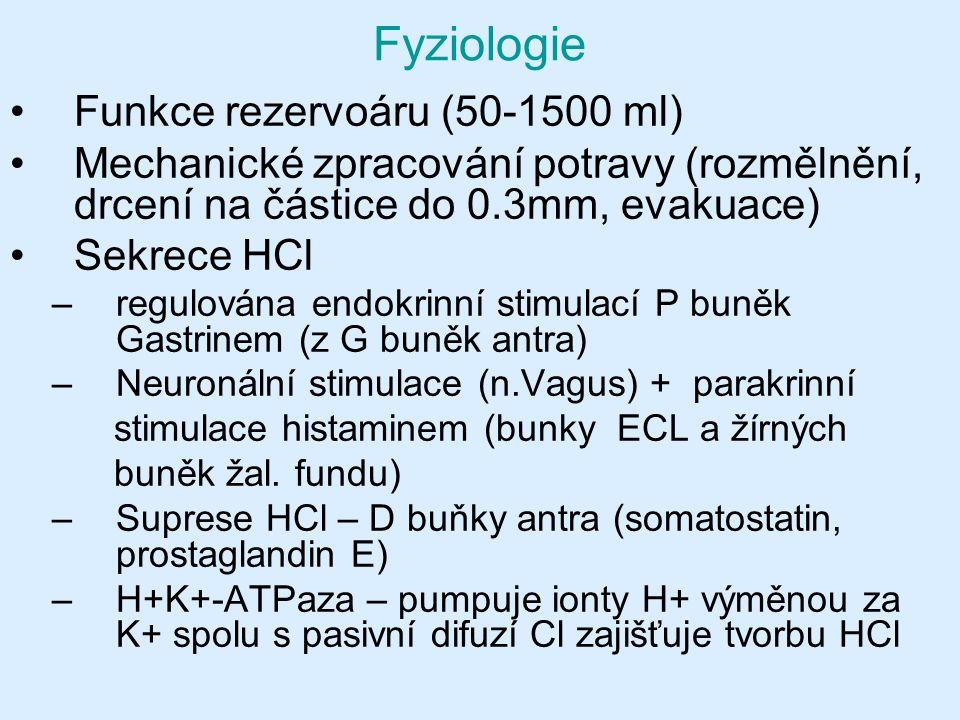 Fyziologie Funkce rezervoáru (50-1500 ml) Mechanické zpracování potravy (rozmělnění, drcení na částice do 0.3mm, evakuace) Sekrece HCl –regulována endokrinní stimulací P buněk Gastrinem (z G buněk antra) –Neuronální stimulace (n.Vagus) + parakrinní stimulace histaminem (bunky ECL a žírných buněk žal.