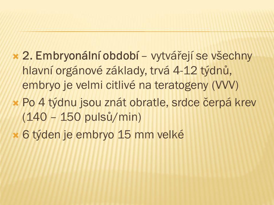  2. Embryonální období – vytvářejí se všechny hlavní orgánové základy, trvá 4-12 týdnů, embryo je velmi citlivé na teratogeny (VVV)  Po 4 týdnu jsou