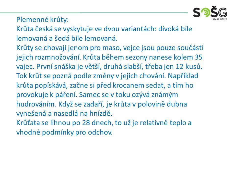 Plemenné krůty: Krůta česká se vyskytuje ve dvou variantách: divoká bíle lemovaná a šedá bíle lemovaná.