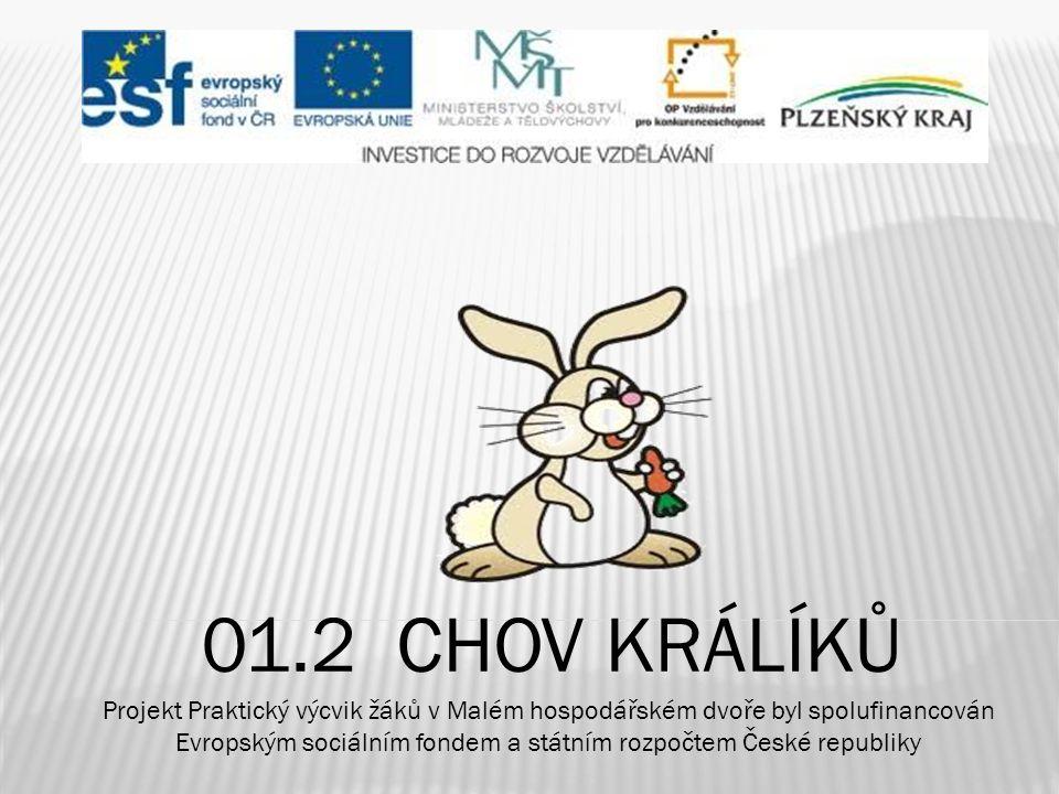  - králík domácí má jediného předka - králíka divokého  - divoké králíky chovali již Římané  - rozšíření do Evropy (Anglie, Německo)  - velký rozvoj kožešnictví  - sestavení standardů několika plemen  - v ČR počíná chov se stájovým králíkem