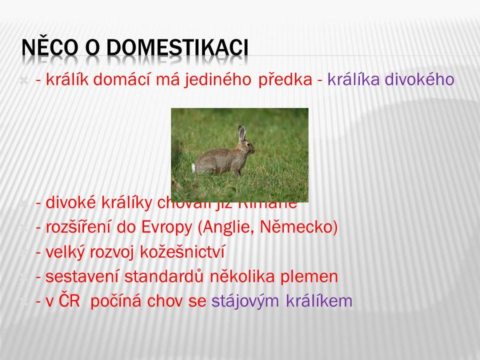  - králík domácí má jediného předka - králíka divokého  - divoké králíky chovali již Římané  - rozšíření do Evropy (Anglie, Německo)  - velký rozv