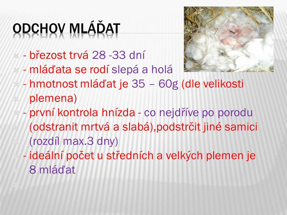  - králíčata začínají vidět 9-12 den  - denní přírůstek kolem 35g/den  - na 1g přírůstku- potřeba 2g mléka  - týden před porodem vyčistit kotec,vložit  hnízdo, stelivo  - odstav - za 6-10 týdnů  - vždy odstavíme samici od mláďat  - mláďata by měla být přeléčena  proti kokcidióze a očkována proti  moru a myxomatóze