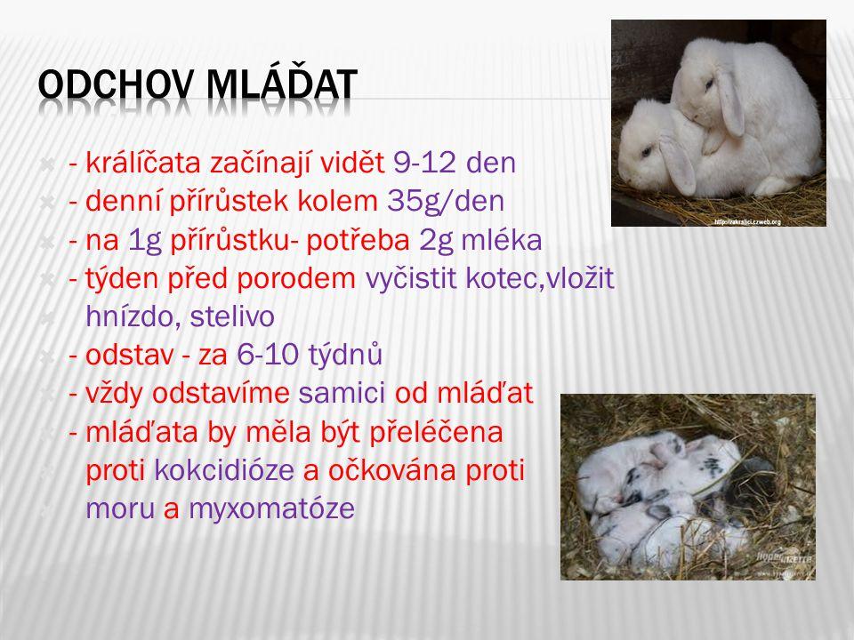  - králíčata začínají vidět 9-12 den  - denní přírůstek kolem 35g/den  - na 1g přírůstku- potřeba 2g mléka  - týden před porodem vyčistit kotec,vl