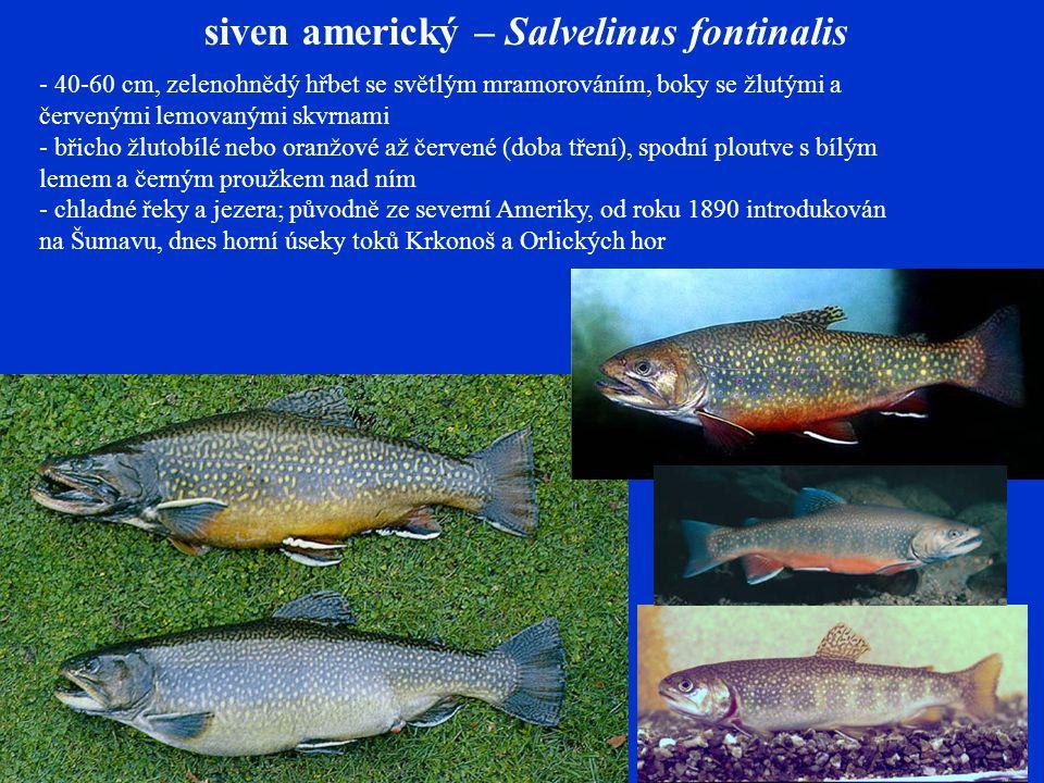 siven americký – Salvelinus fontinalis - 40-60 cm, zelenohnědý hřbet se světlým mramorováním, boky se žlutými a červenými lemovanými skvrnami - břicho žlutobílé nebo oranžové až červené (doba tření), spodní ploutve s bílým lemem a černým proužkem nad ním - chladné řeky a jezera; původně ze severní Ameriky, od roku 1890 introdukován na Šumavu, dnes horní úseky toků Krkonoš a Orlických hor