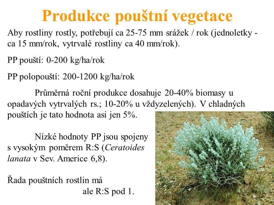 Produkce pouštní vegetace Aby rostliny rostly, potřebují ca 25-75 mm srážek / rok (jednoletky - ca 15 mm/rok, vytrvalé rostliny ca 40 mm/rok). PP pouš