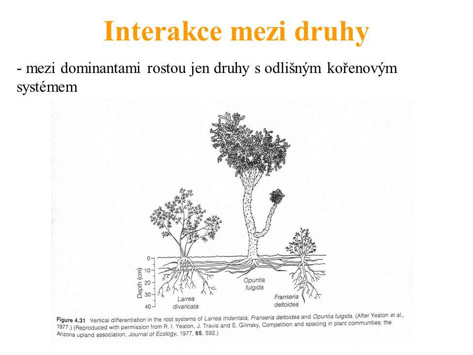 Interakce mezi druhy - mezi dominantami rostou jen druhy s odlišným kořenovým systémem