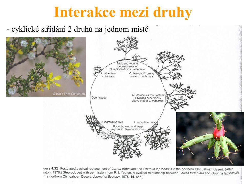 Interakce mezi druhy - cyklické střídání 2 druhů na jednom místě
