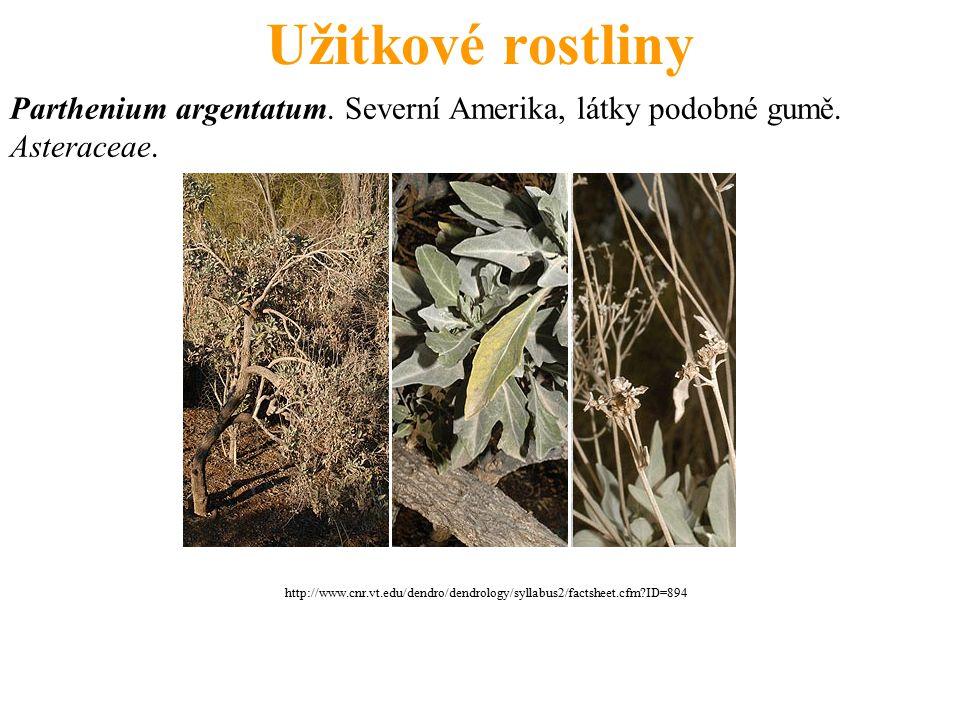 Užitkové rostliny Parthenium argentatum. Severní Amerika, látky podobné gumě. Asteraceae. http://www.cnr.vt.edu/dendro/dendrology/syllabus2/factsheet.