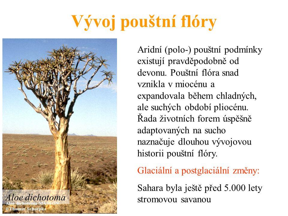 Vývoj pouštní flóry Aridní (polo-) pouštní podmínky existují pravděpodobně od devonu. Pouštní flóra snad vznikla v miocénu a expandovala během chladný