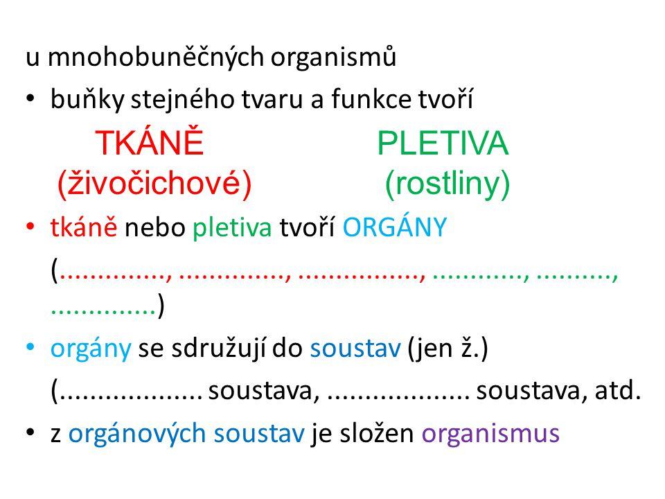 u mnohobuněčných organismů buňky stejného tvaru a funkce tvoří tkáně nebo pletiva tvoří ORGÁNY (..............,..............,................,.......