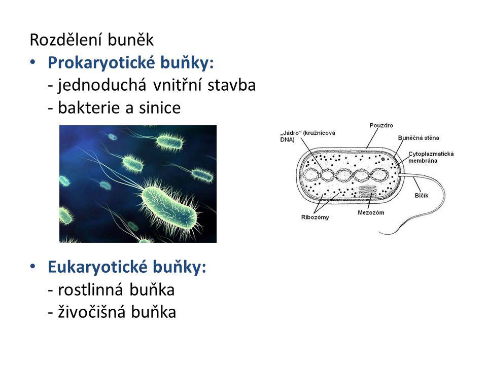 Rozdělení buněk Prokaryotické buňky: - jednoduchá vnitřní stavba - - bakterie a sinice Eukaryotické buňky: - rostlinná buňka - živočišná buňka