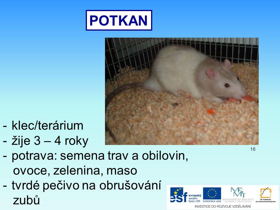 POTKAN -klec/terárium -žije 3 – 4 roky -potrava: semena trav a obilovin, ovoce, zelenina, maso -tvrdé pečivo na obrušování zubů 16